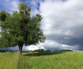 Baum mit Gewitterwolken